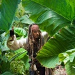 johnny depp dans la jungle