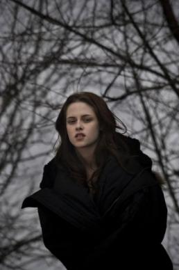 image 11 - Twilight - Chapitre 1 : Fascination